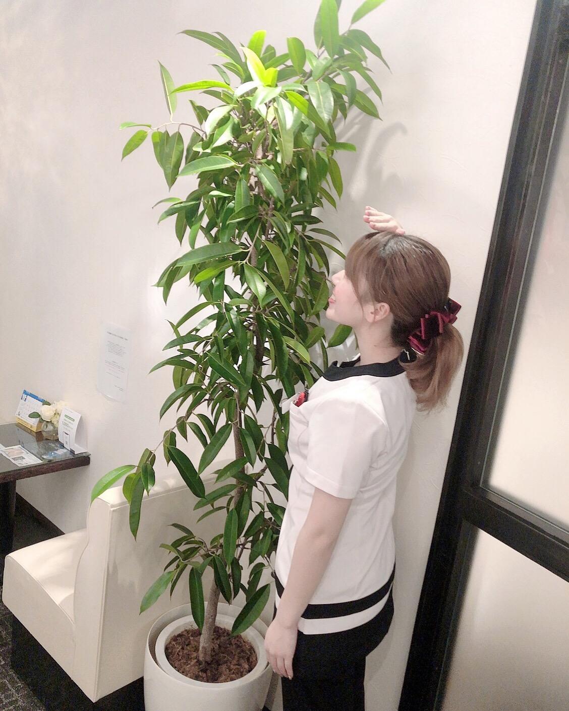観葉植物.jpeg